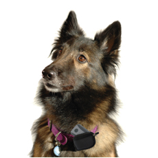 Who Let the Dogs Out? Company Provides Product to Keep Spot Safe