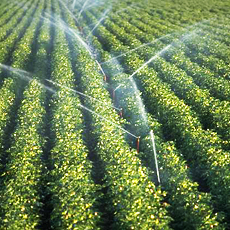 Real-Time Irrigation Data for Growers Delivered by Technology from MapShots and AgSense