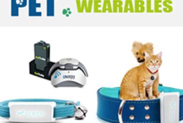 Pet Wearables: The Next Billion Dollar Market