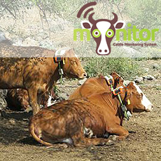 cow monitoring system by Moonitor
