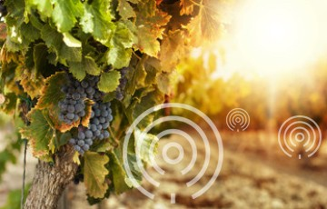 Kerlink Partners with Libatel to Deploy Lebanon's First Internet of Things Network for Smart Agriculture