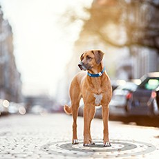 Orange Business Services provides reassurance for pet owners with IoT connectivity for Tractive's pet wearables and tracking devices