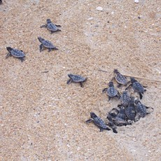 turtle nesting monitoring via M2M technology