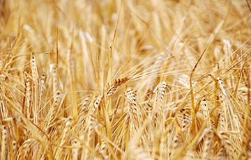 M2M Cellular Innovation Aims to Increase the World's Food Supply