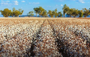 Semtech's LoRa Technology Creates Smarter Farming Networks in Australia