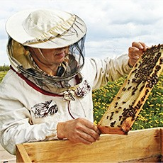 IoT Technology may be key to solving honeybee crisis