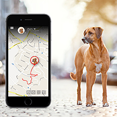 2.8 million pets to be equipped with tracking devices in Europe and North America by 2021