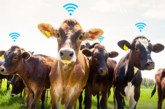 Smart Farm Technologies: Shaping Security on Farms